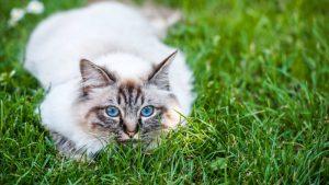 Dongeradeel ondersteunt initiatief tegen verwilderde katten