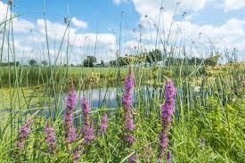 Vooruitgang geboekt voor de biodiversiteit!